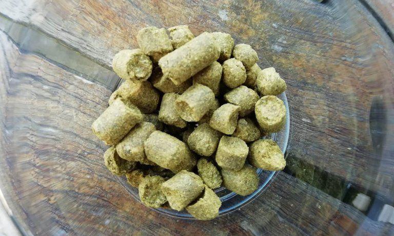 Fuggles hop. Een van de vele hopsoorten.