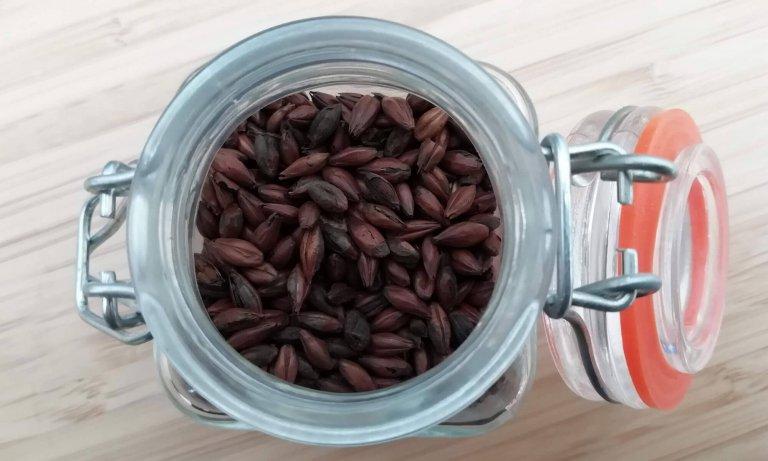 Koffiemout kan worden gebruikt voor het brouwen van een porter of stout.