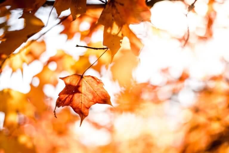 Het is herfst dus tijd voor herfstbieren